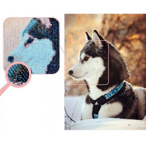 HUSKY BORDADO CON DIAMANTES